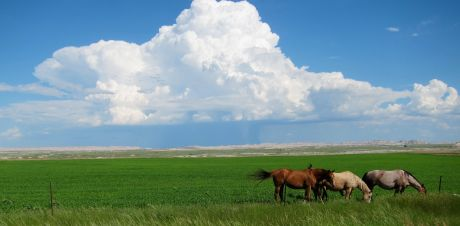 Sioux horses at Pine Ridge Reservation